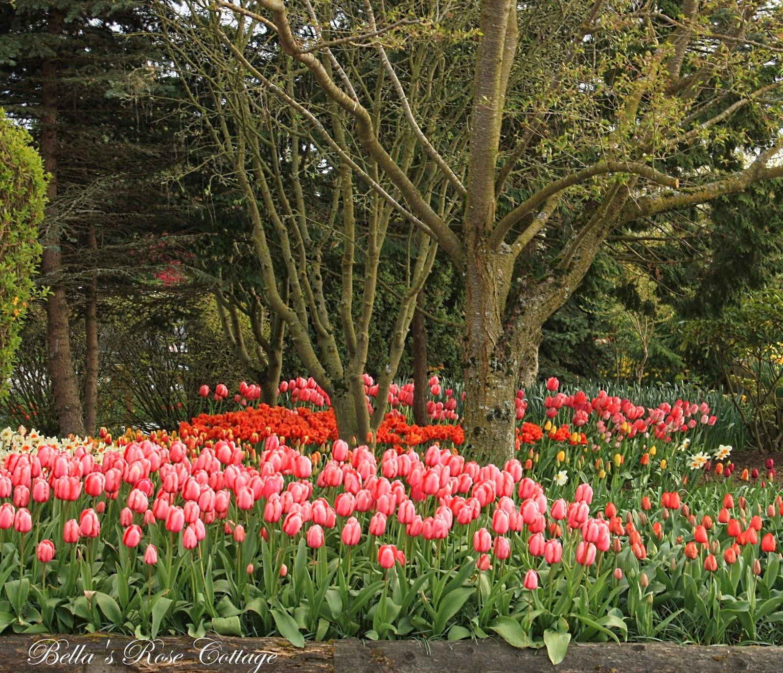 Bella\'s Rose Cottage: Tulip Festival... | Garden - Flowers ...