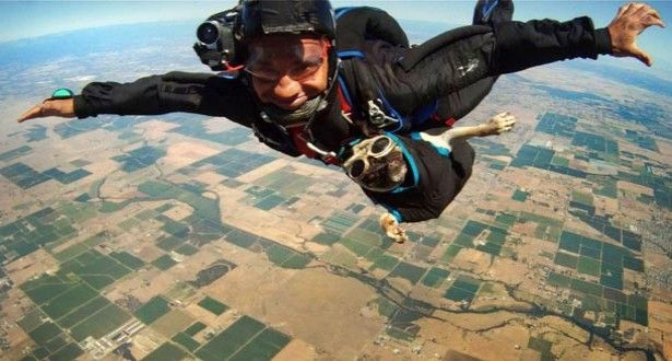 Skydiving Dog Inspirational Pets Dog Adventure Pets