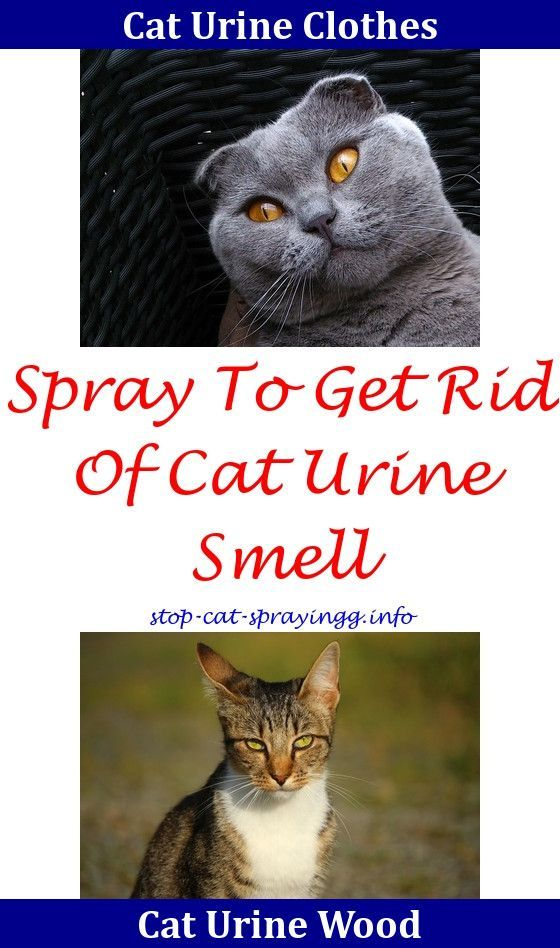 Cat Spraying How To Make Removing Old Cat Urine From