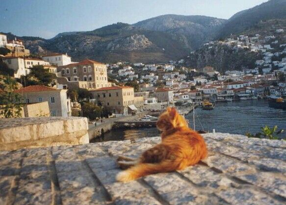 Hydra, Greece, beautiful redhaired cat.