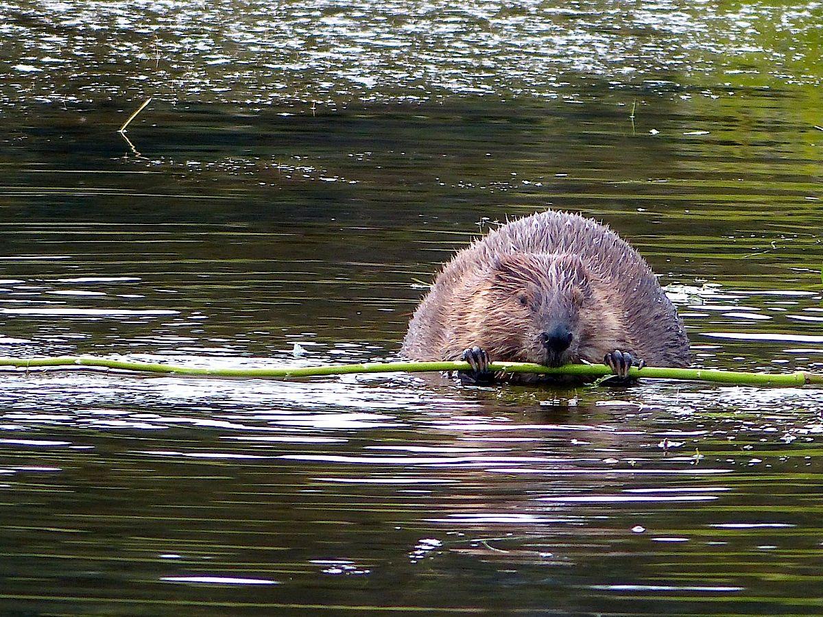 Image result for fairbanks wildlife