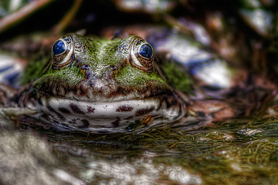 Kiss me by Leo Walter on 500px