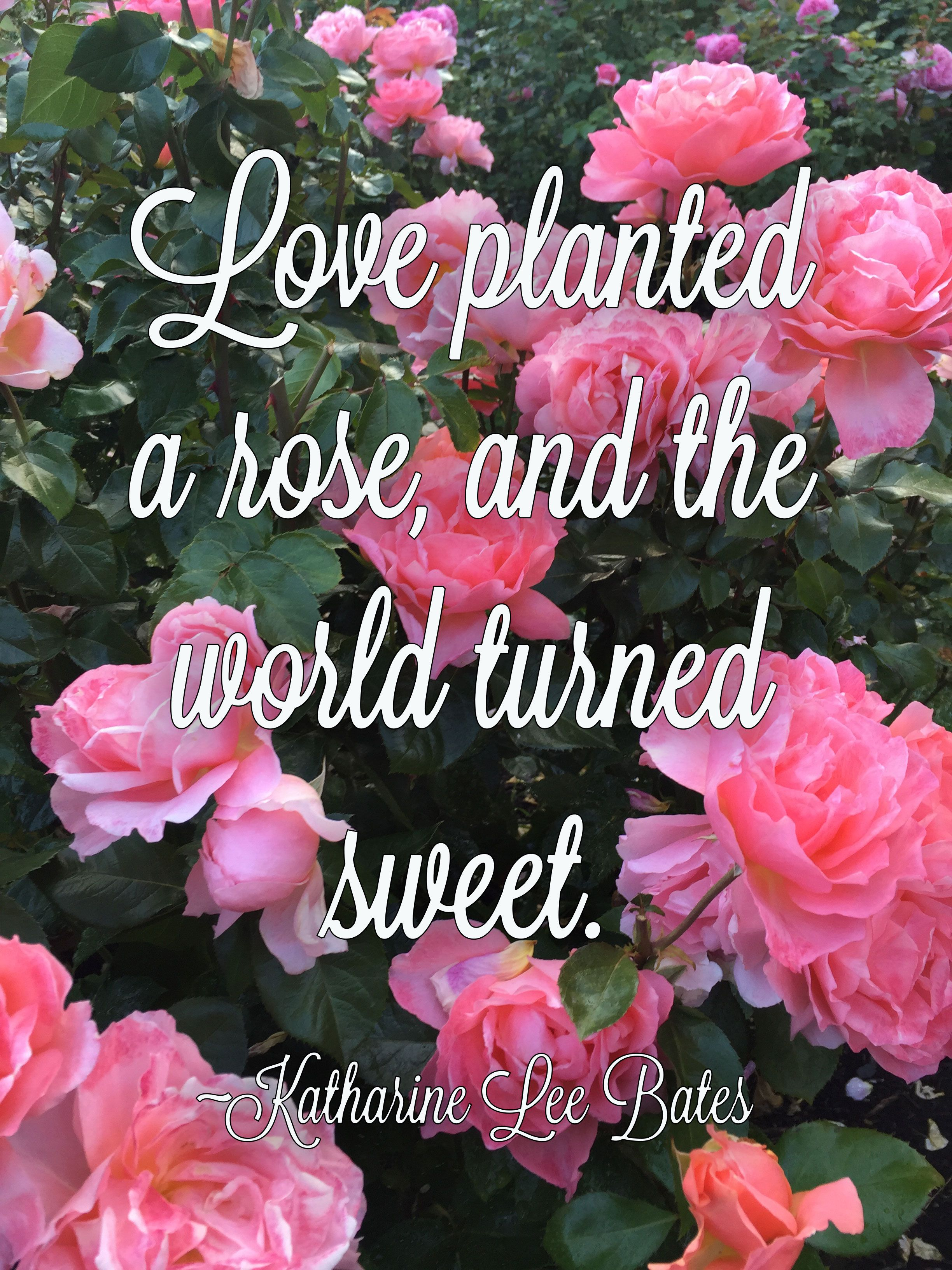 Love Garden Roses: Love Planted A Rose, And The World Turned Sweet