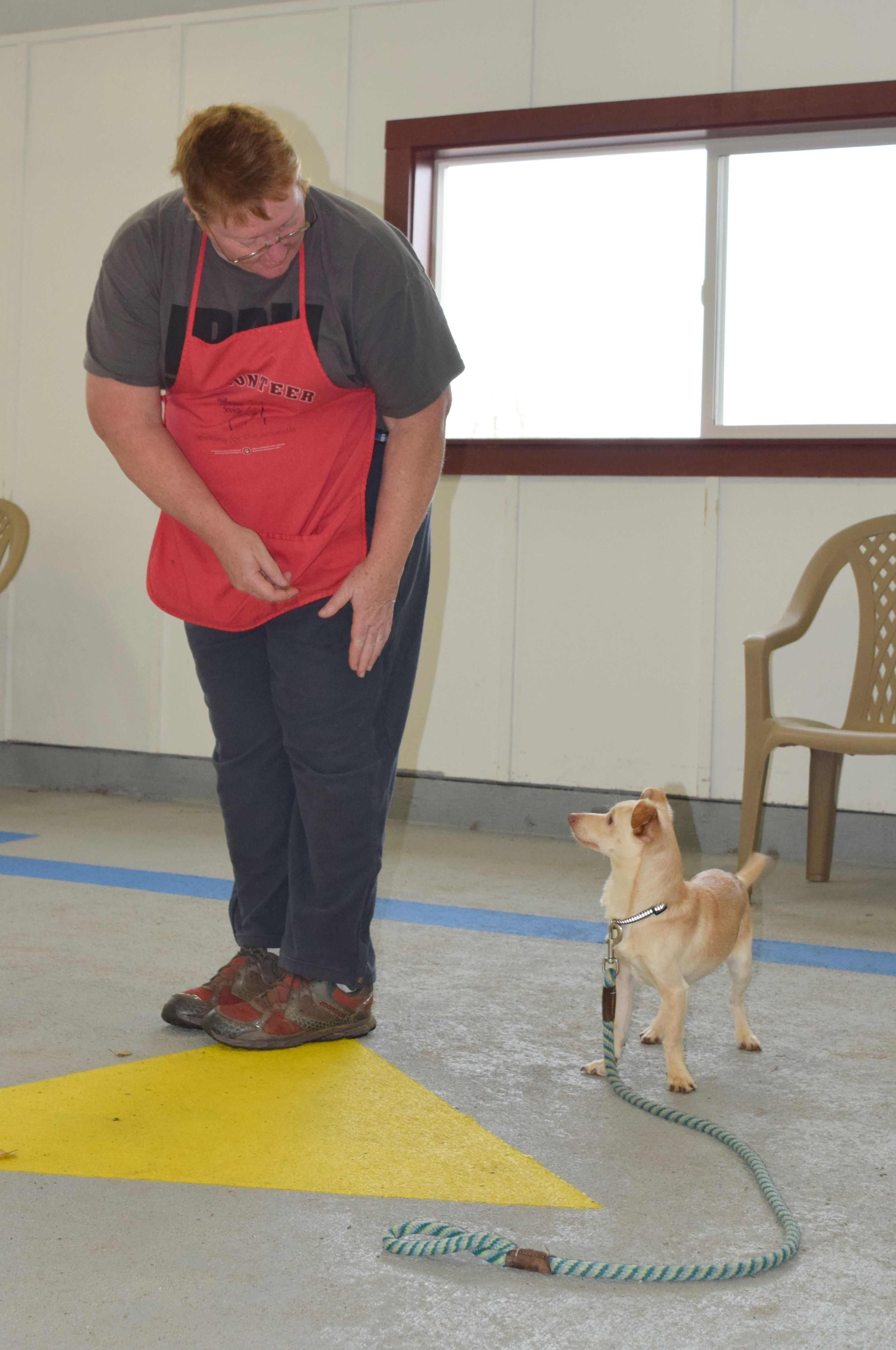 Golden Valley Humane Society Boarding For More Information
