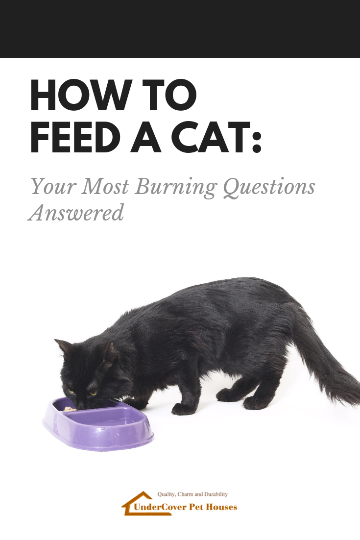 How To Feed A Cat Your Most Burning Questions Answered In 2020 This Or That Questions Cats Cat Parenting