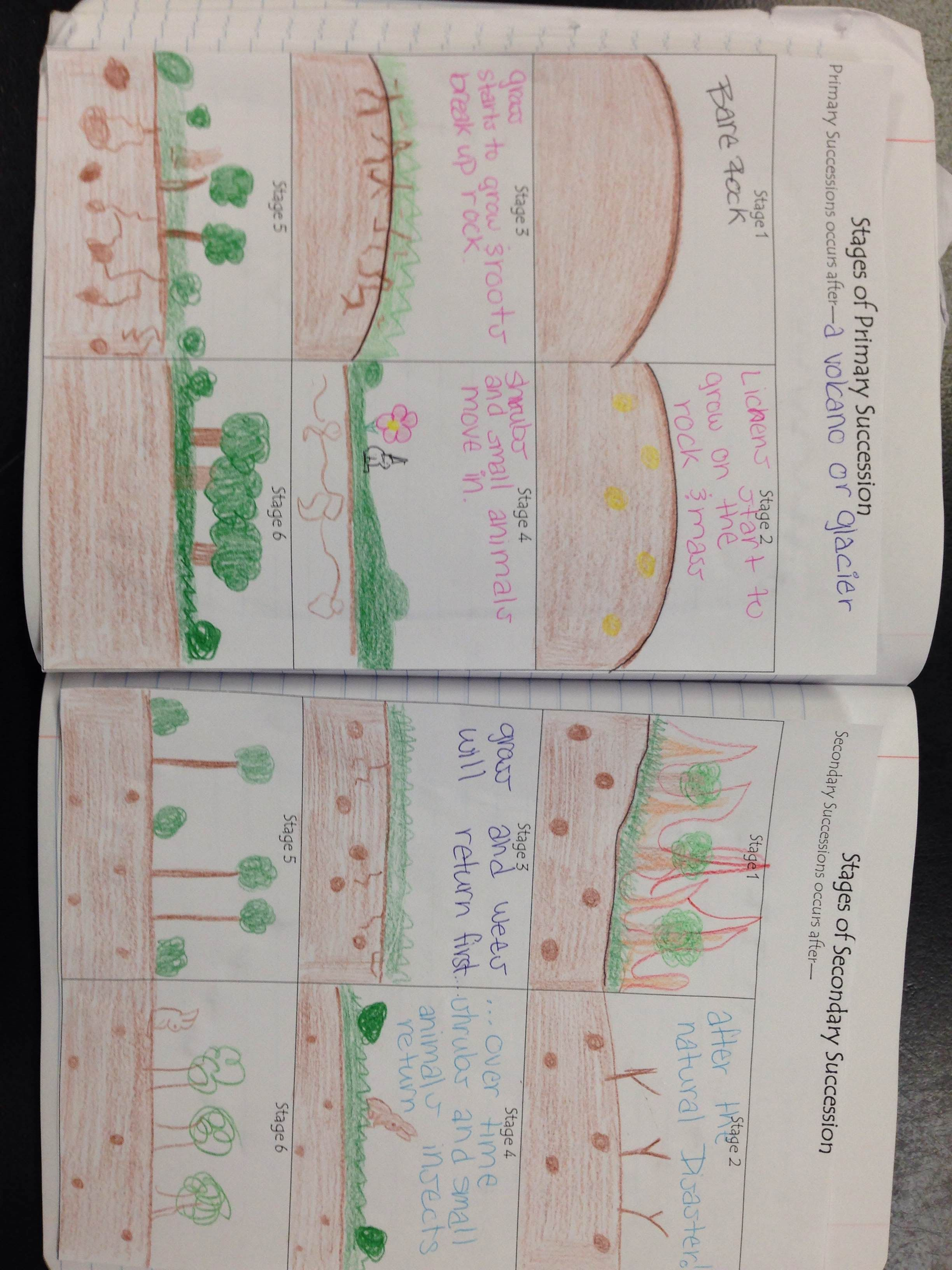 Primary And Secondary Succession Picture Notes Kesler Science Secondary Succession Ecological Succession Earth Science Middle School