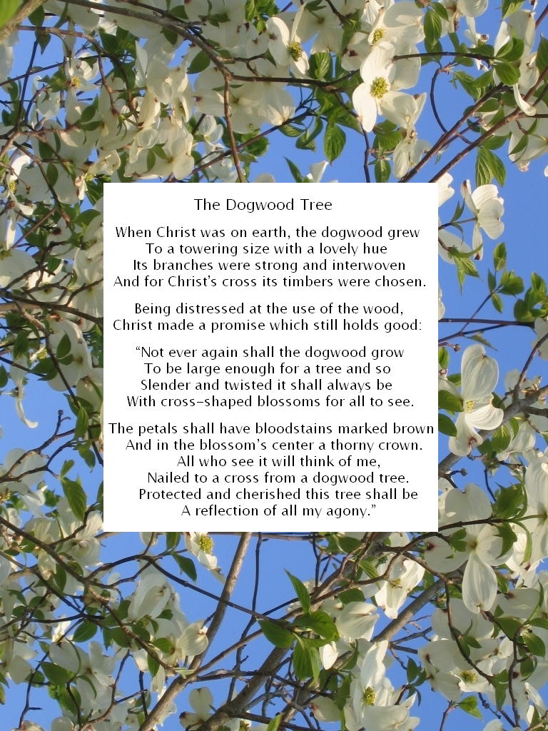 Legend Of The Dogwood Tree Printable The Legend Of The Dogwood By Dmusso1989 Dogwood Trees Dogwood Tree Poem