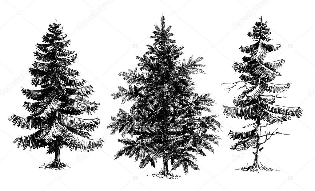 1 photo of 38 for realistic pine tree drawing