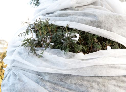 Как правильно подготовить хвойные растения к зиме, повысить их морозостойкость, защитить от ожогов и ледяного дождя