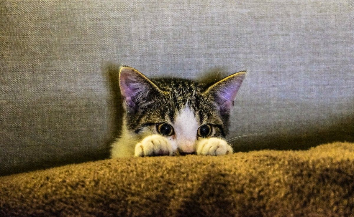 What Fear In Leadership Looks Like Cat Care Cats And Kittens Cat Behavior