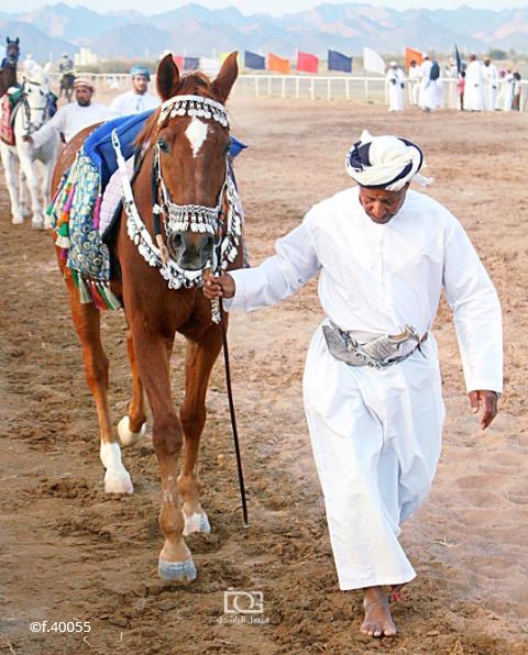 Didyouknow Horse Riding And The Breeding Of Arabian Horses Remains A Cherished Tradition In Oman هل كنت تعلم أن ركوب الخيل وتربية الخيول العربية الأصيلة من