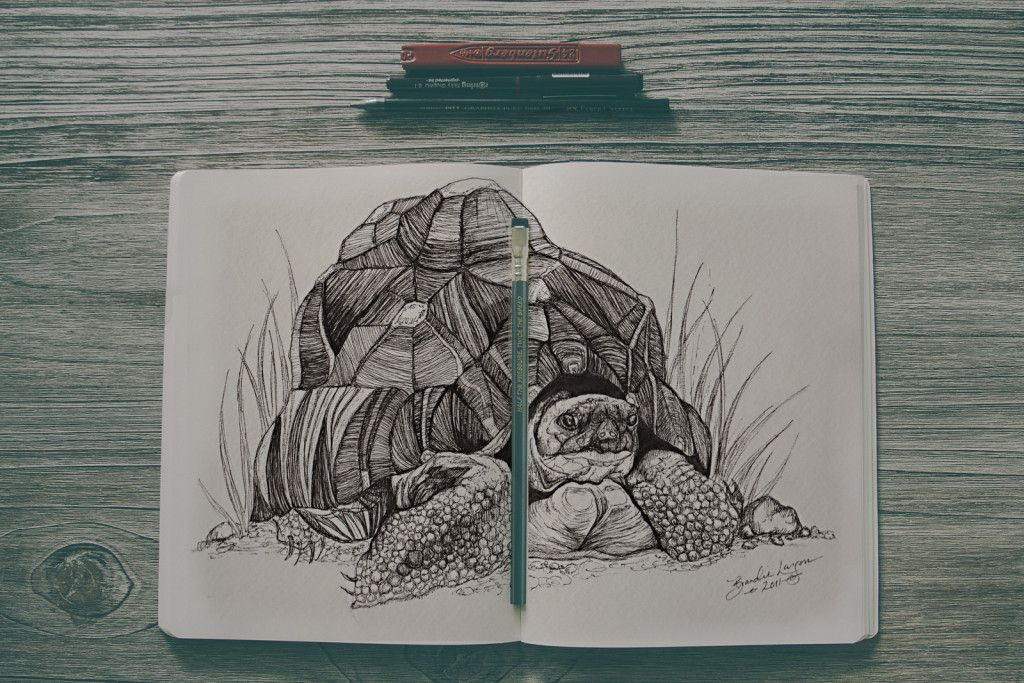 Amazing Hand-Drawn Tortoise Illustration in Ink. Art by Brandie Larson, graphicbrewery.com.  Want a custom pet portrait, contact me at my website!
