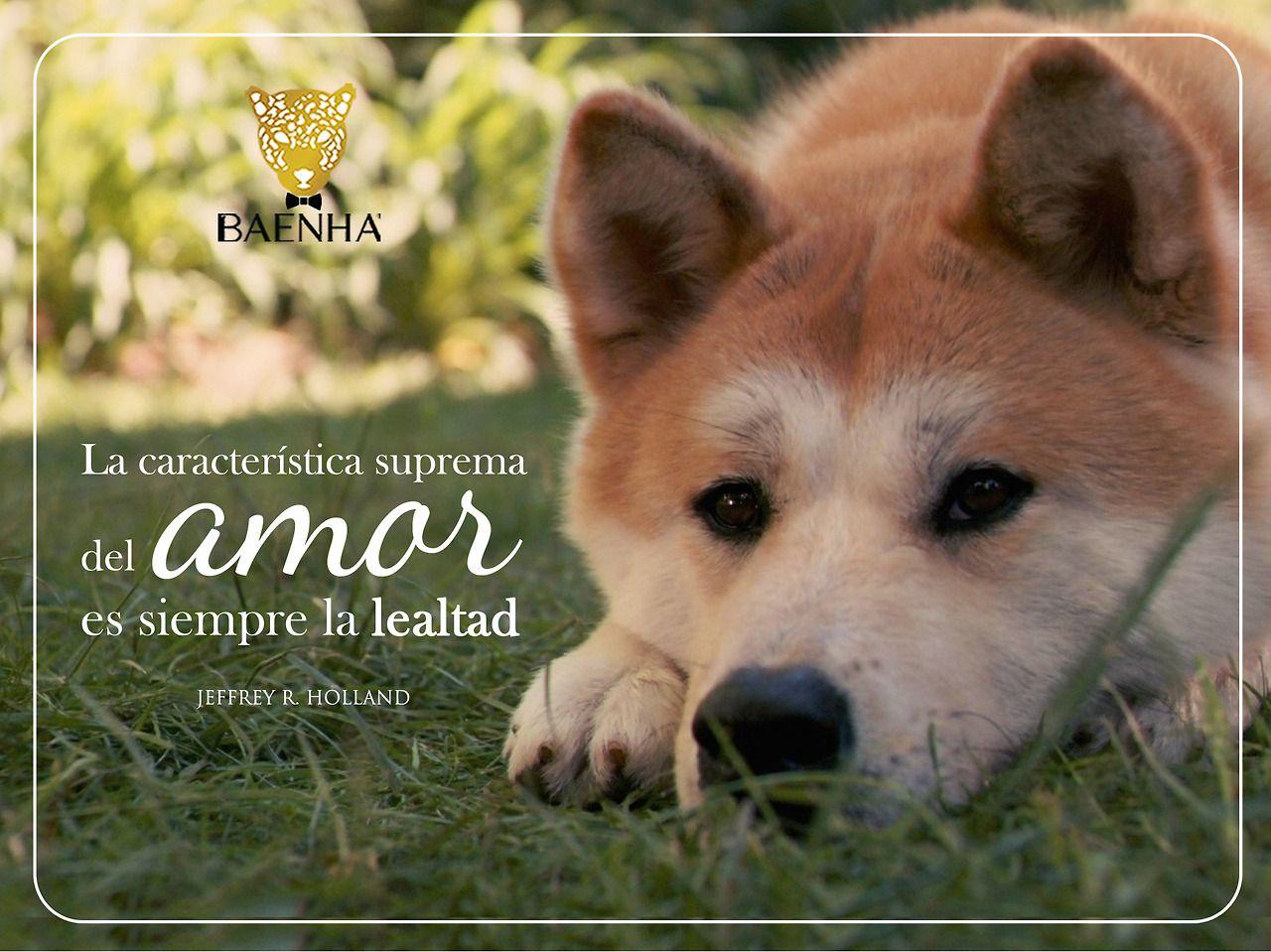 Husky Frases: #Hachi #lealtad #SinLlorar