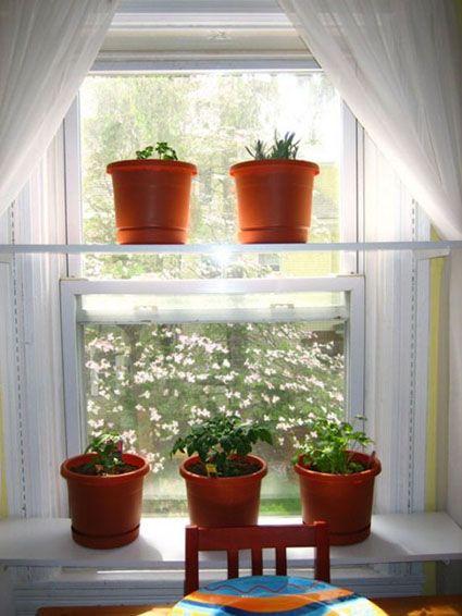 Macetas de plantas aromaticas en la ventana de la cocina - Plantas aromaticas en la cocina ...