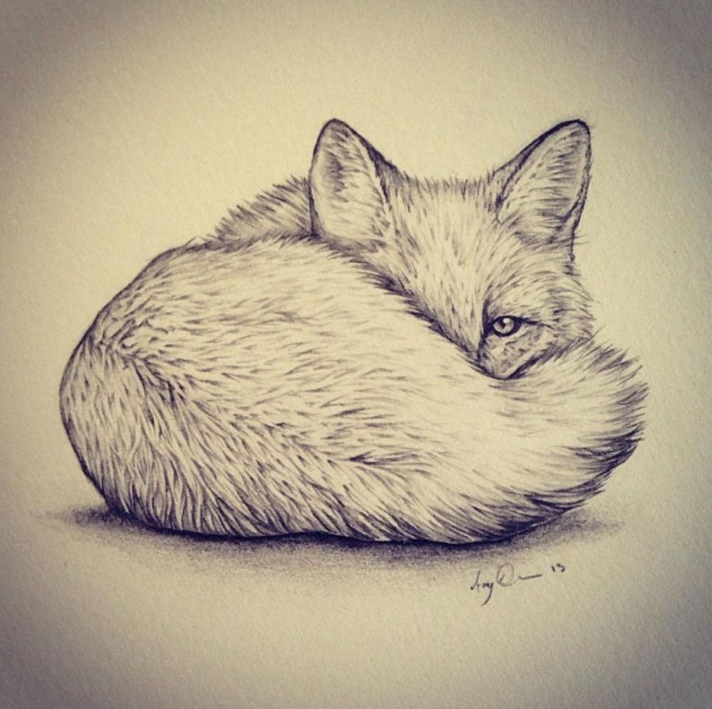Arctic Fox Tattoo Google Search Animal Drawings Cute Fox Drawing Drawings