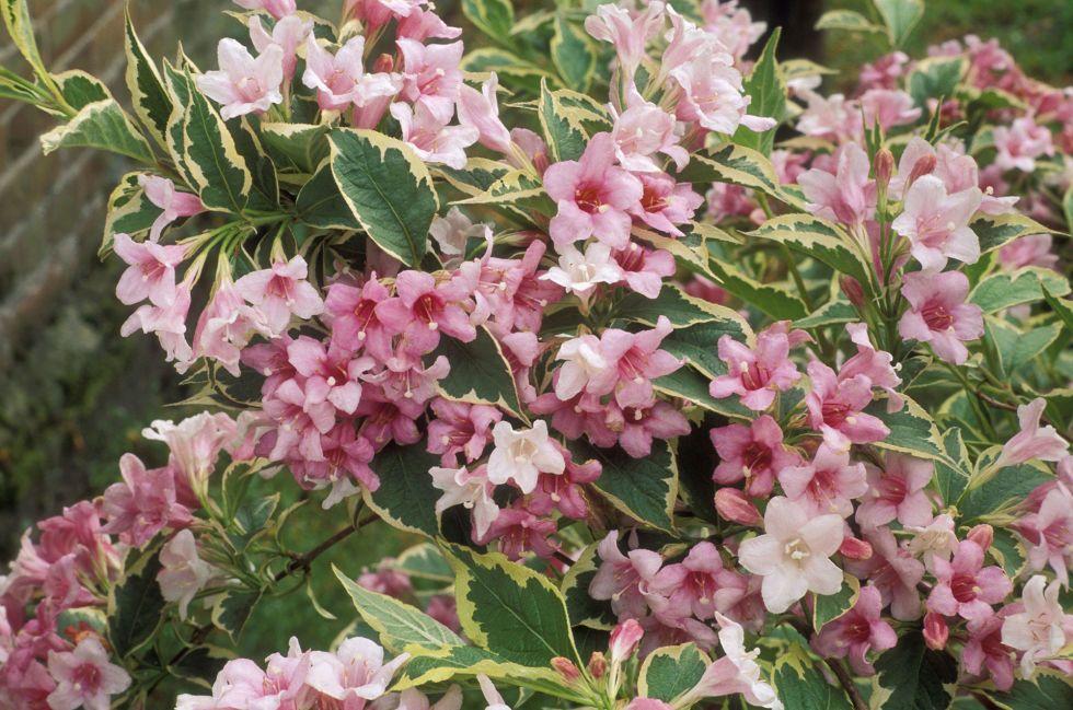 Risultati immagini per arbusti sempreverdi pieno sole | garden ...