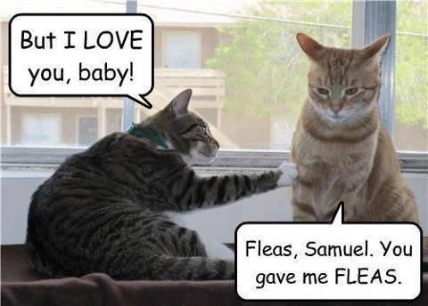 Image result for cat with fleas funny