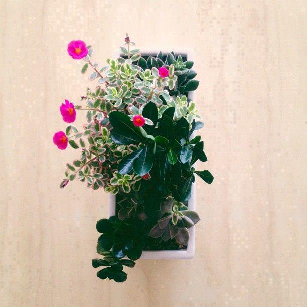 planter // sally j shim
