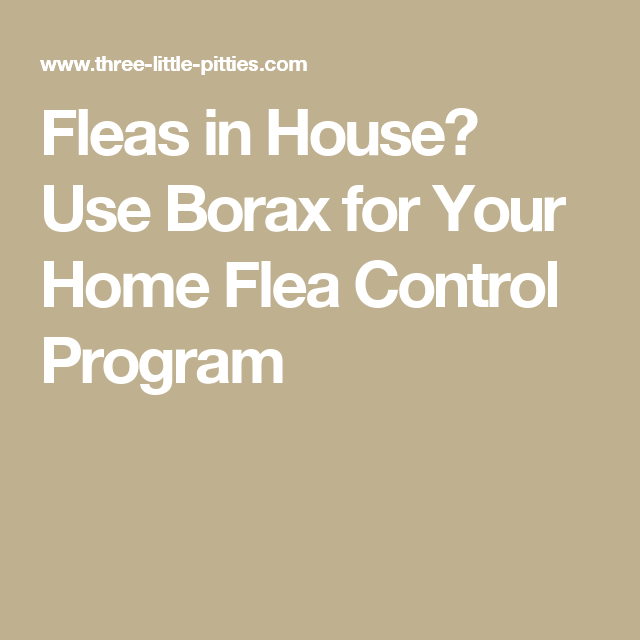 Fleas In House Use Borax For Your Home Flea Control Program With