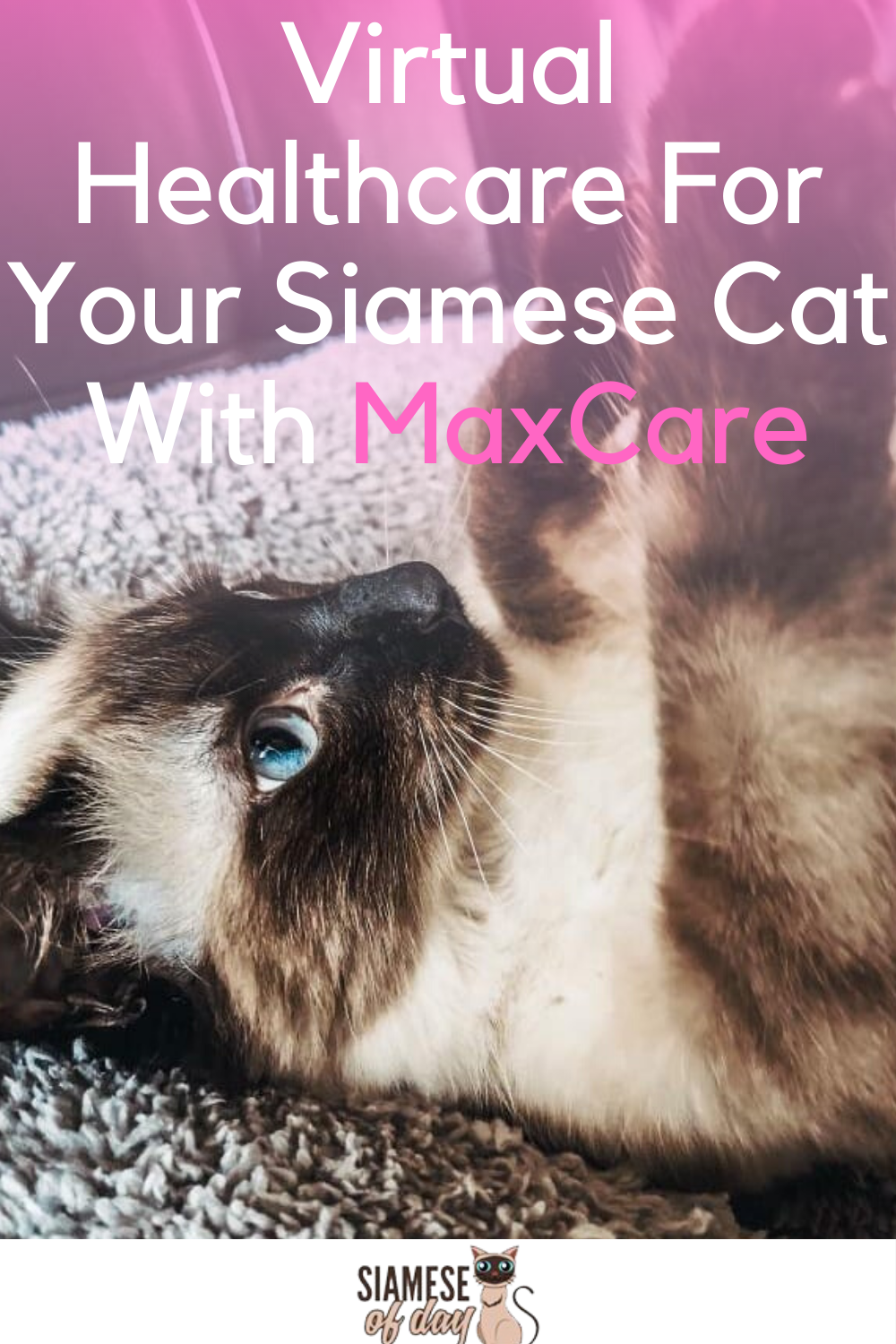 Virtual Healthcare For Your Siamese Cat With MaxCare