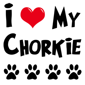 My mom and I just figured out that our dog, Dierks, is a Chorkie.  Poor thing has had an identity crisis for years lol