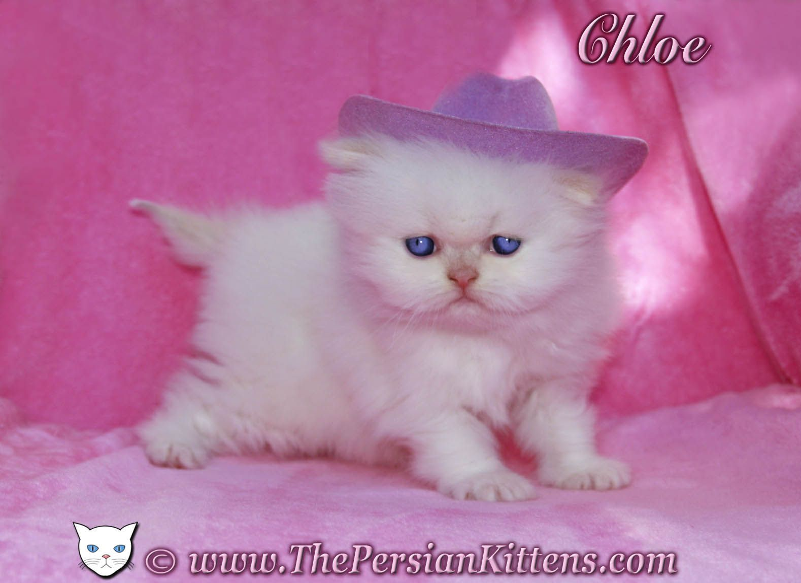 This Is What God Gives Us Watch This Video Http Www Godfruits Com This Tiny Kitten With Big Eyes Looks Like A Kittens Cutest Persian Kittens Kitten Pictures
