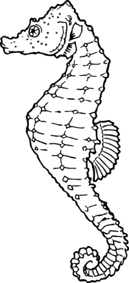 seahorse coloring page Google Search Animal coloring