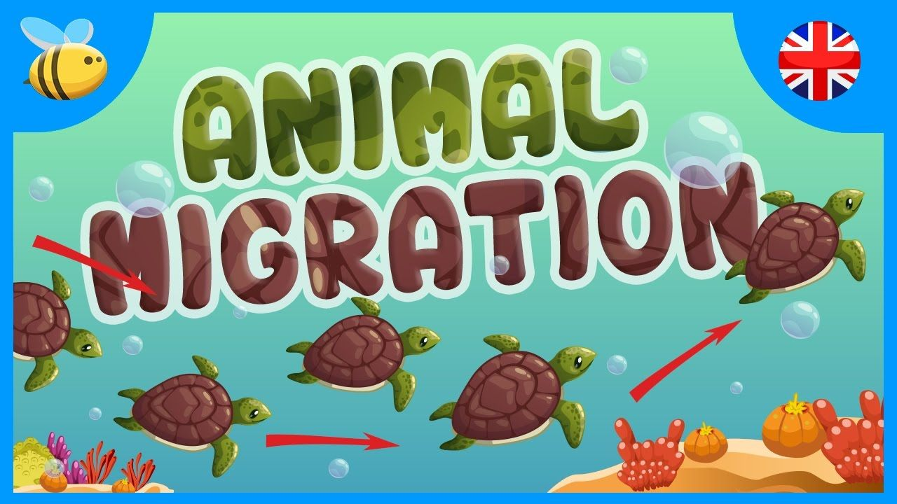 Animal Migration Why do they do it? Educational Videos
