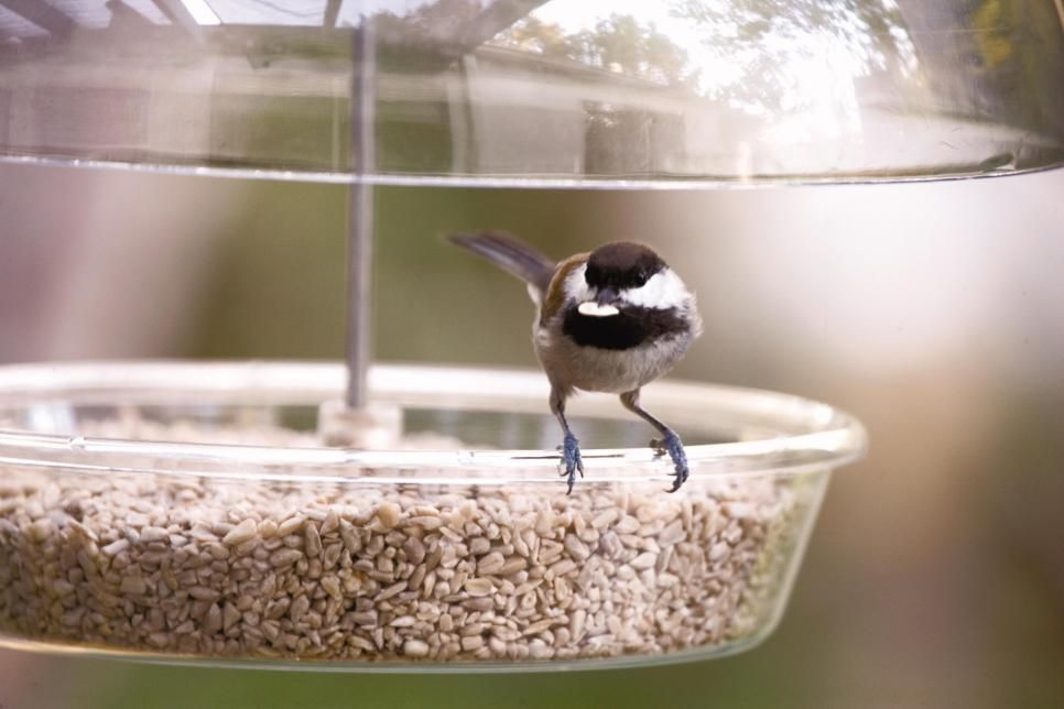Don't let ants and squirrels spoil your bird-watching. These feeders and gadgets help deter pests and save seed.