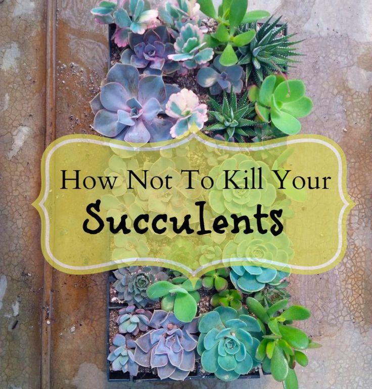 How Not To Kill Your Succulents | Backyard decorations, Backyard and ...