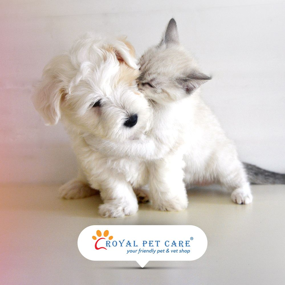 At Our Store We Believe That Your Pets Are Like Our Babies Too To Know More About Our Services Visit Http Bit Ly R Dog Boarding Near Me Pet Clinic Pet Care