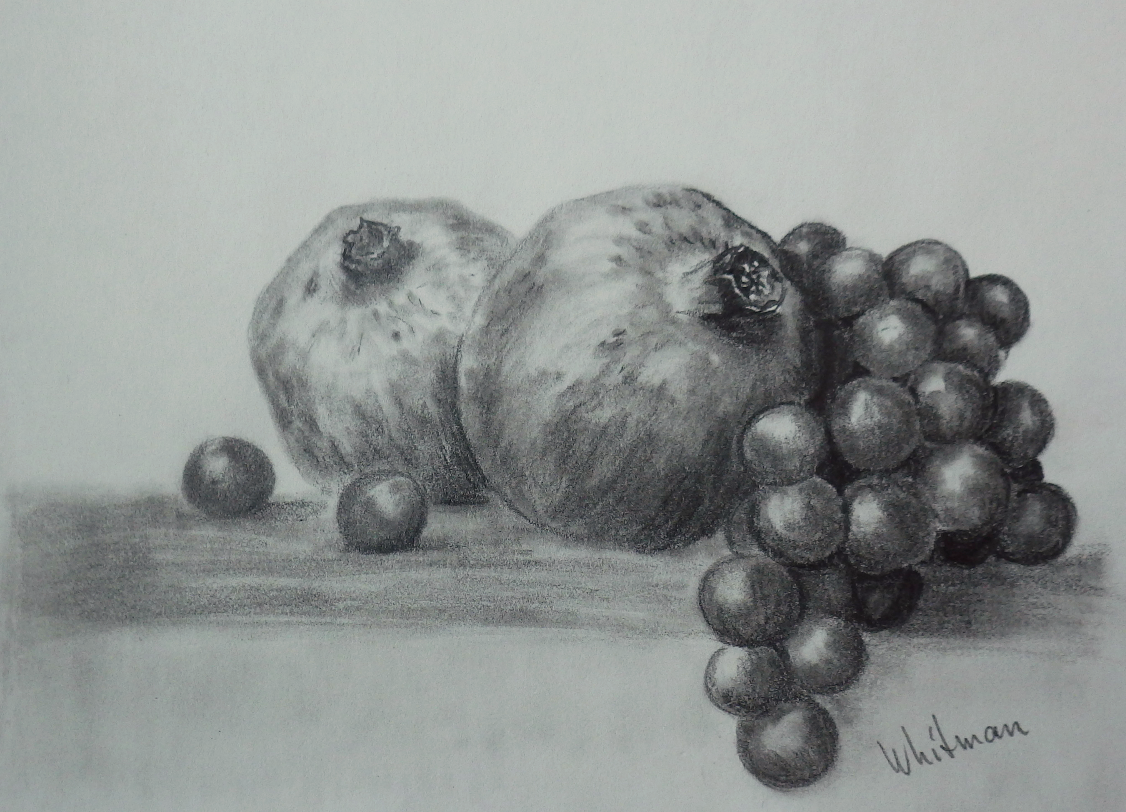 Pomegranates And Grapes Graphite Pencil Drawing By Elena Whitman