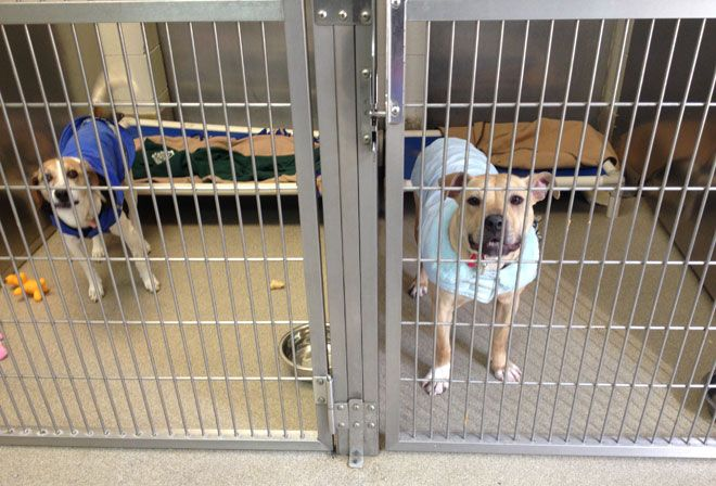 Northeast Side Animal Shelter Loses Heat Discounts Adoption Fee With Images Animal Shelter Animals Mastiff Mix