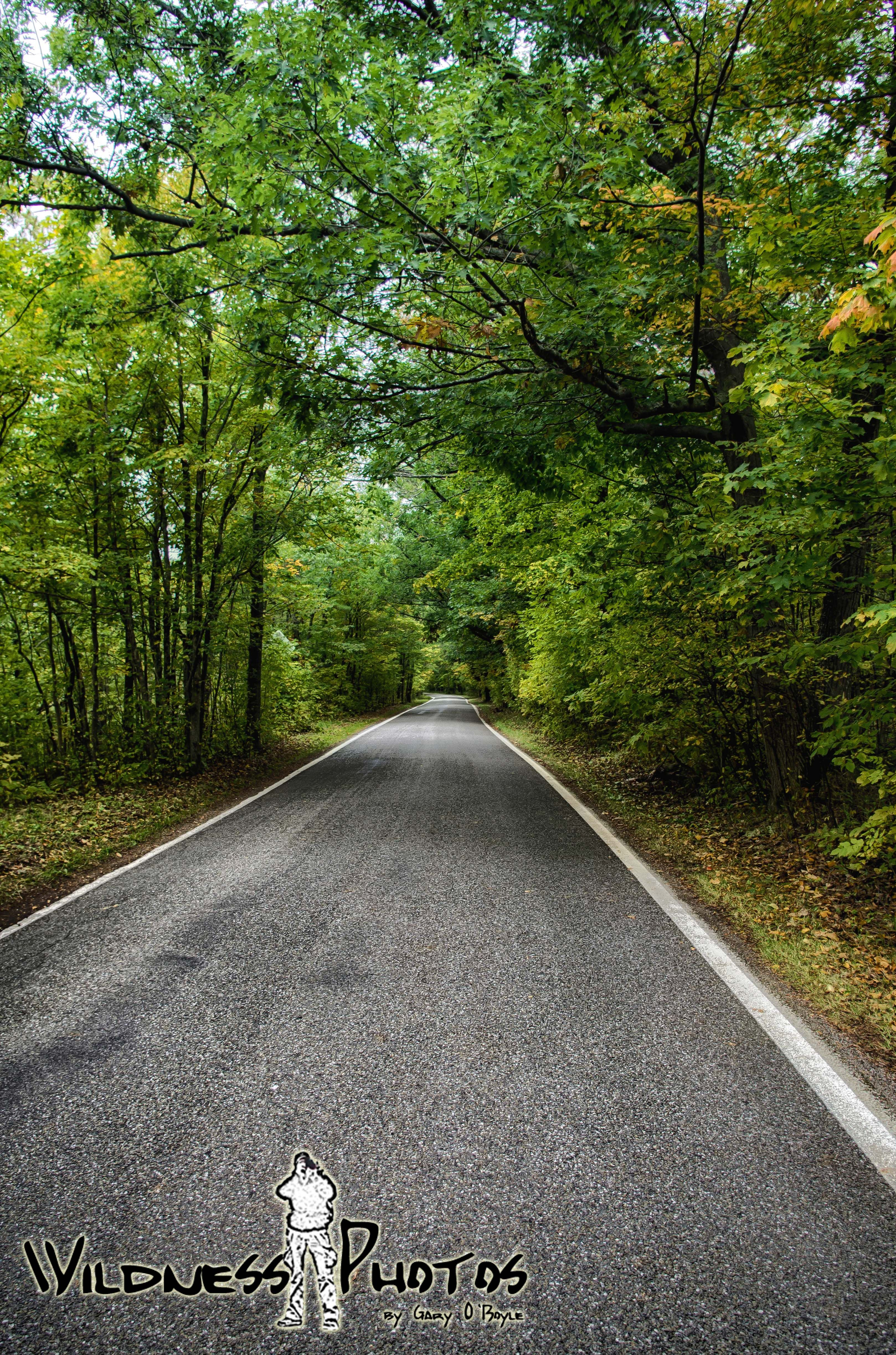 Michigan M119 - Tunnel of Trees 16 | On the Road Again | Pinterest