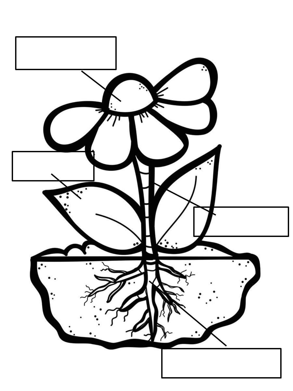 Atividade Interativa Partes Da Planta