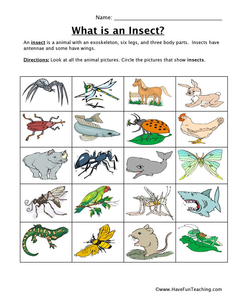 classifyinginsectsworksheet Insect classification