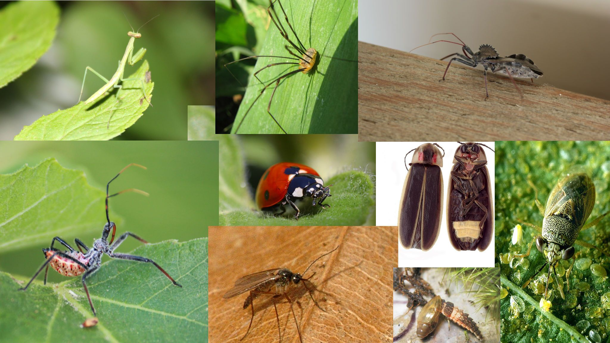 Online course all about learning to identify beneficial garden insects for pest control. Enter coupon code: HALFOFF to receive the course for half the original price. https://www.udemy.com/who-is-your-friend-beneficial-garden-bugs/?dtcode=VoHV9HG2HJ4X