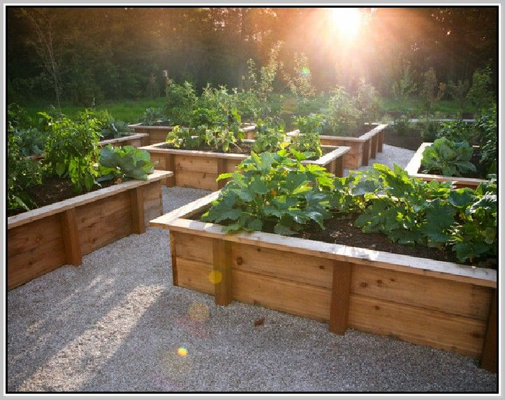 Raised Bed Vegetable Garden Layout Garden Making