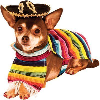Rubie S Costume Company Mexican Dog Serape Small Chewy Com