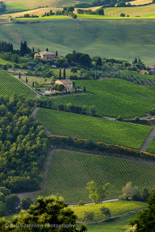 Vineyards of Montelcino, Tuscany Italy. © Brian Jannsen Photography