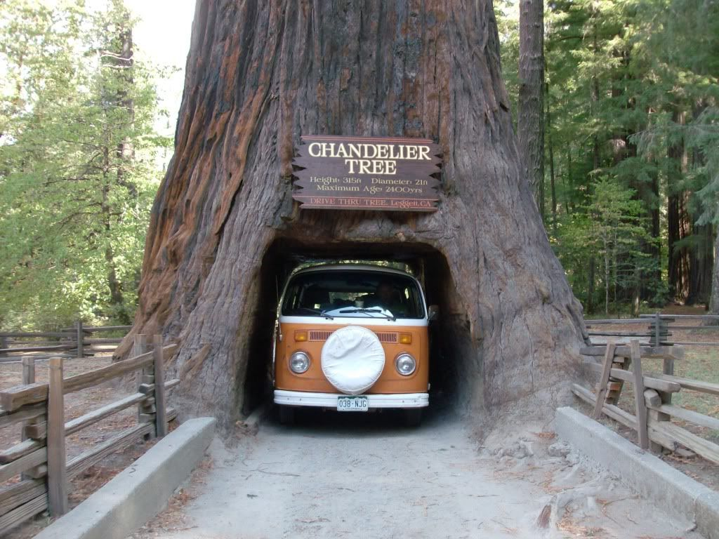 Redwoods california places ive been pinterest road trips national geographic publicscrutiny Choice Image