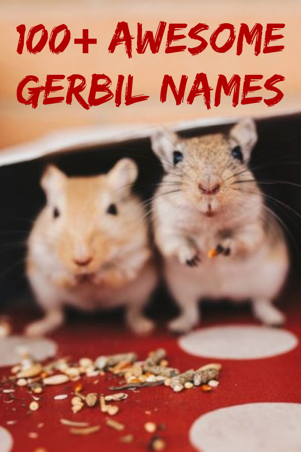 Pin By Julie Wagner On Stuff To Buy Hamster Names Rabbit Names Bunny Names