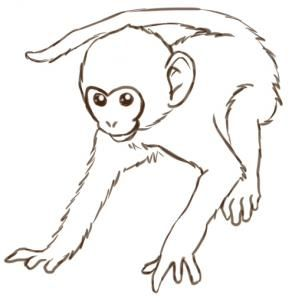 How To Draw Monkeys Step By Step Rainforest Animals Animals Free Online Drawing Tutorial Added By Puzzlepiec Monkey Drawing Monkey Art Monkey Drawing Easy