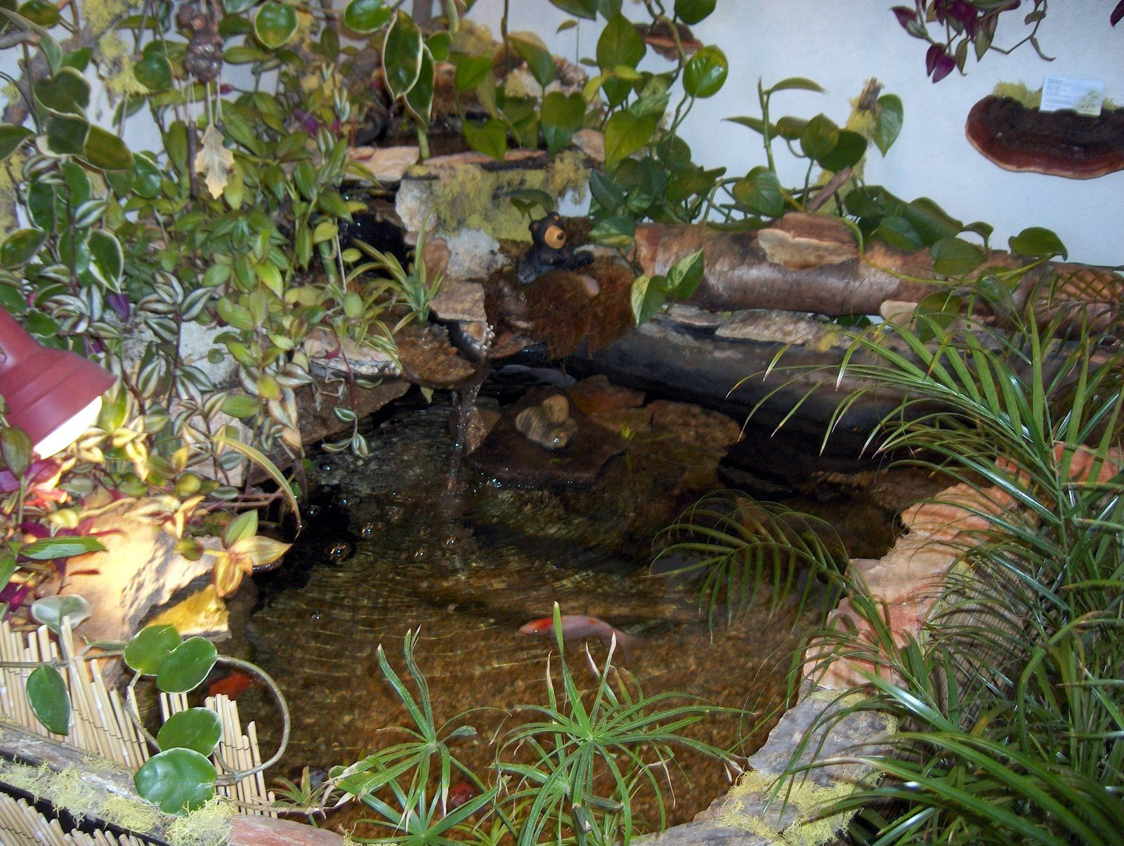 Indoor turtle pond indoor koi and turtle pond home for Koi pool decor