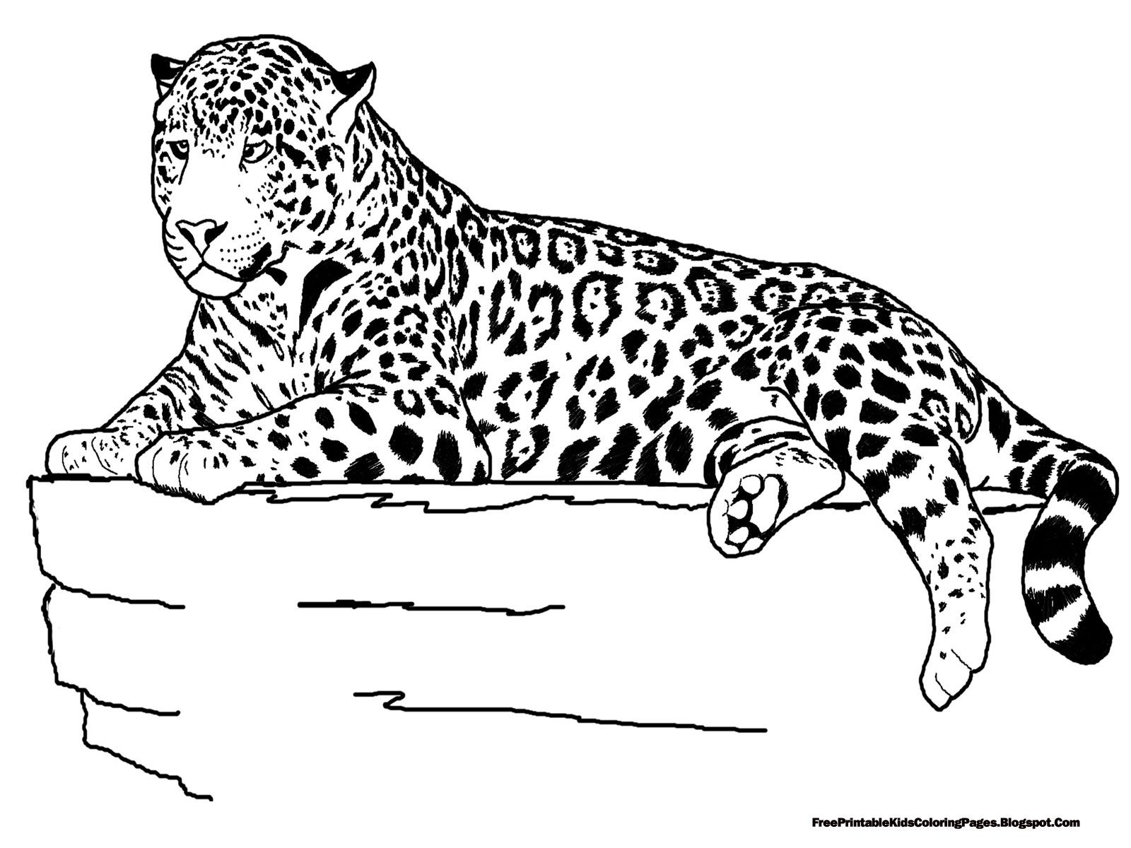 Realistic Animals Coloring Pages Printable Sheets For Kids Get The Latest Free Images Favorite