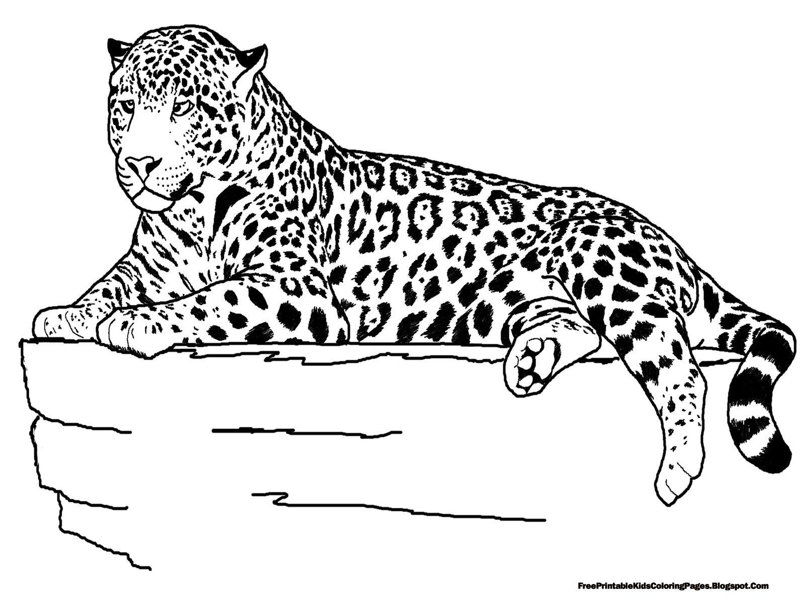 Line Drawing Jaguar : Jaguar google search line drawings for literacy