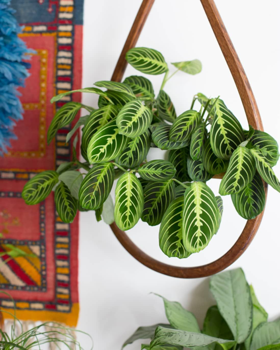 7 Houseplants With The Most Unique Leaves We Ve Ever Seen