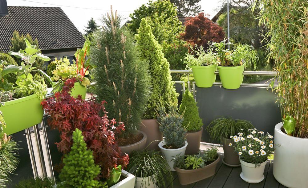 BalkonGestaltung mit pflegeleichten Immergrünen
