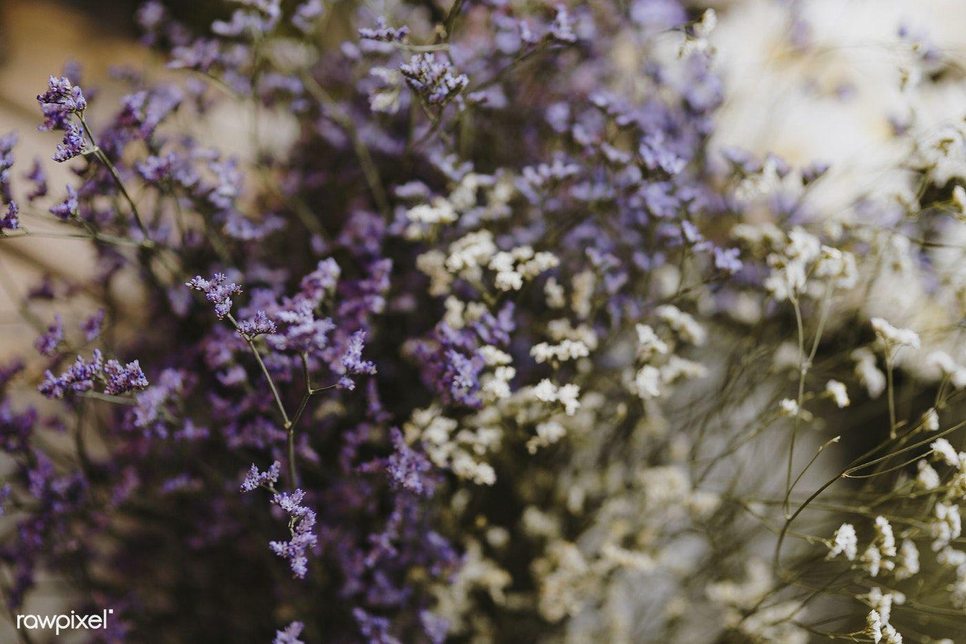 Closeup Of White And Purple Caspia Flowers Free Image By Rawpixel Com Karolina Kaboompics