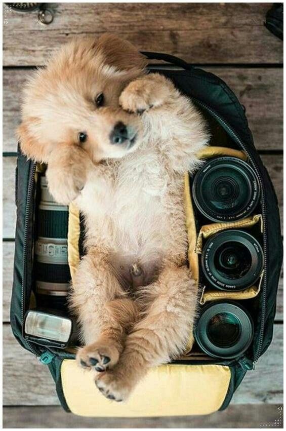 Pin Von Anna Auf Sweety Mit Bildern Welpen Tiere Hunde